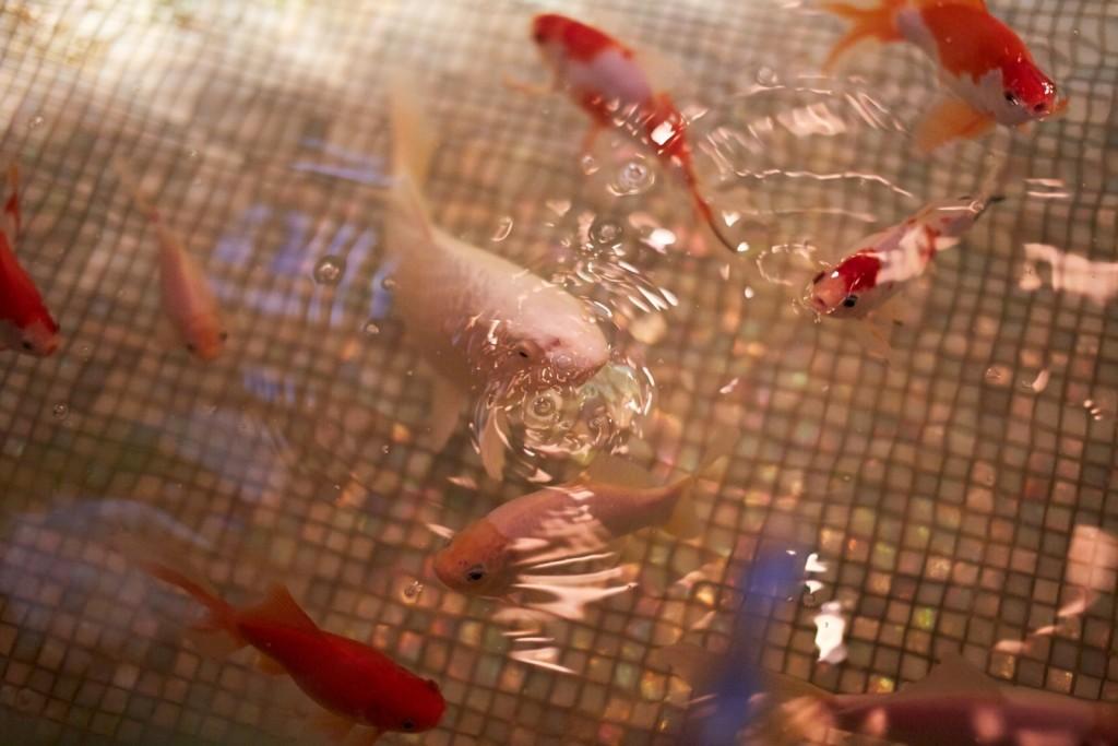 Золотые рыбки в ресторане Savoy